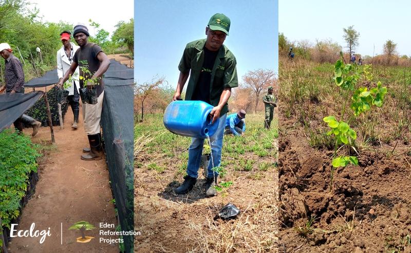 Ecologi Eden Reforestation projects